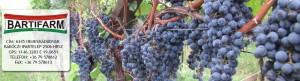 Bartifarm szőlő